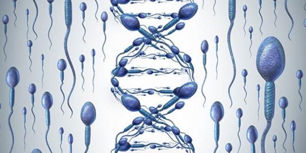 Sperm DNA Hasar Tespiti